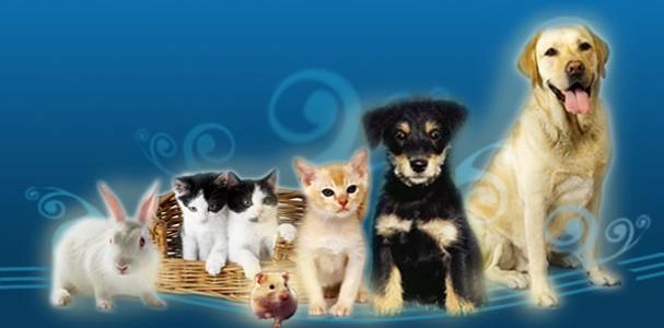 A lo largo de la historia las mascotas han demostrado ser una perfecta compañía para los seres humanos y en la actualidad se ha comprobado que poseen excelentes cualidades terapéuticas. […]